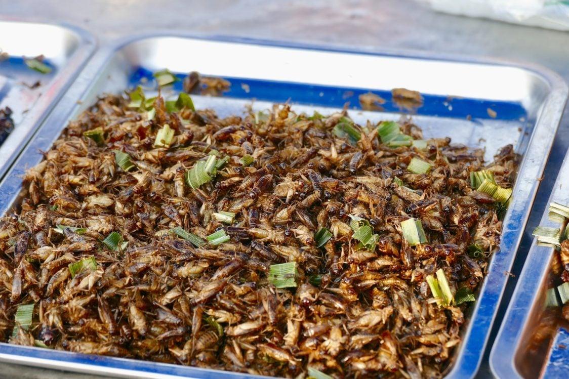 entomofágia - konzumácia hmyzu