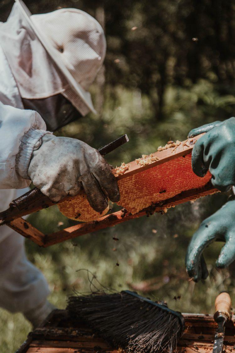 Miele - un dolcificante con una ricca tradizione