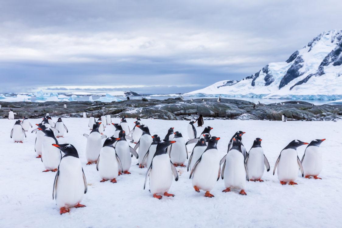 pingvini na Antarktiki