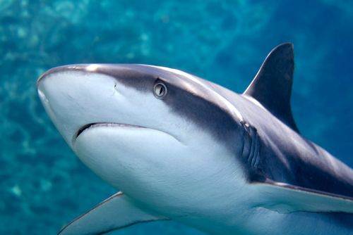 žraločia chrupavka na liečbu aj prevenciu