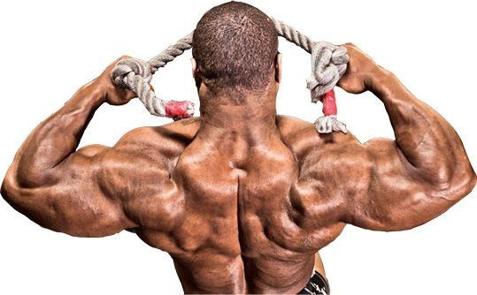 deltové svaly cviky gymbeam zoznam cvikov