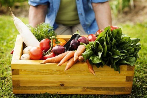 gmo geneticky modifikované potraviny označenie