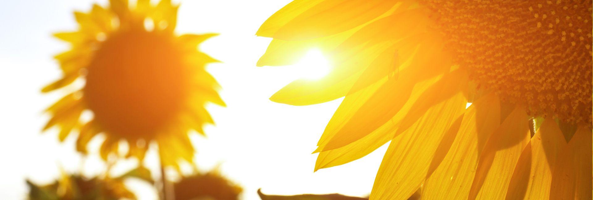 Slnečný vitamín vitamín D