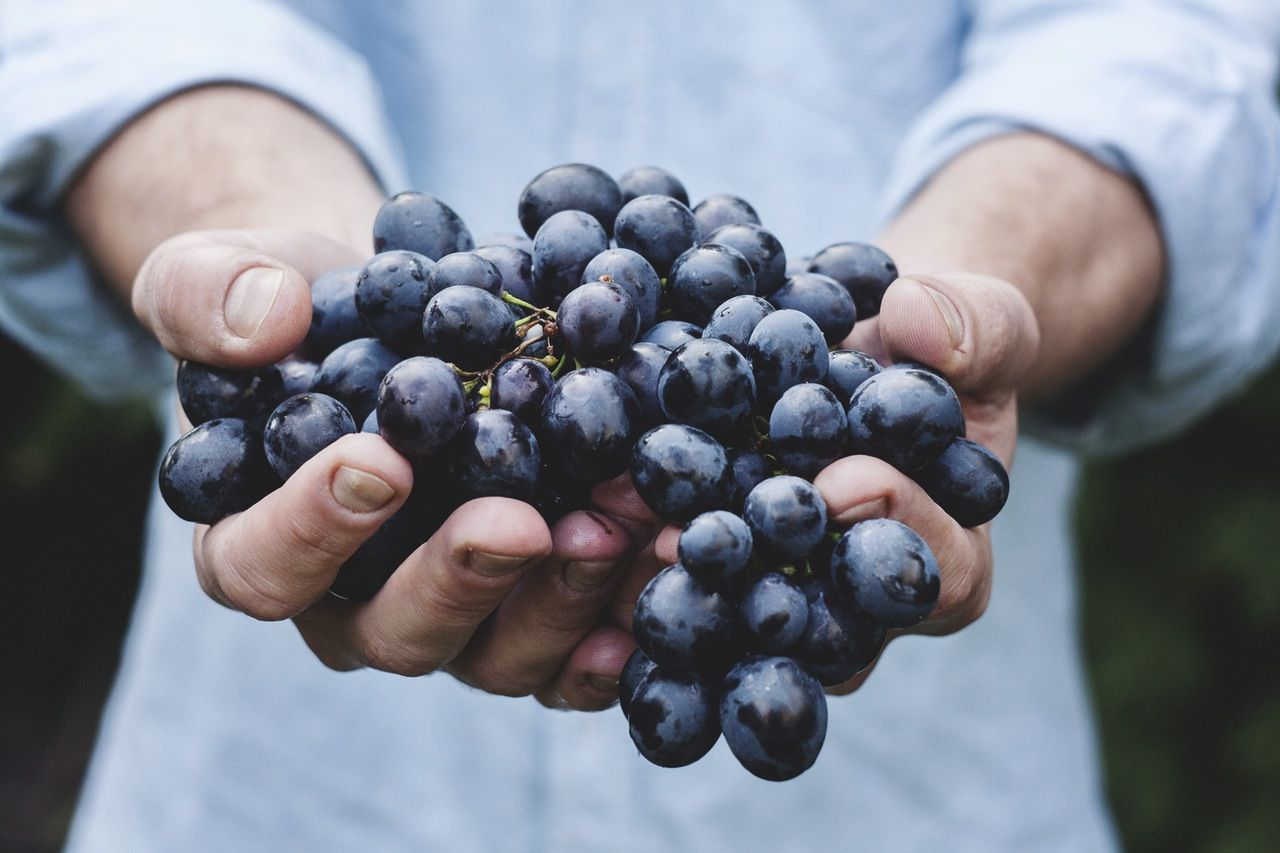 hroznové jadierka: top 10 najzdravších semien