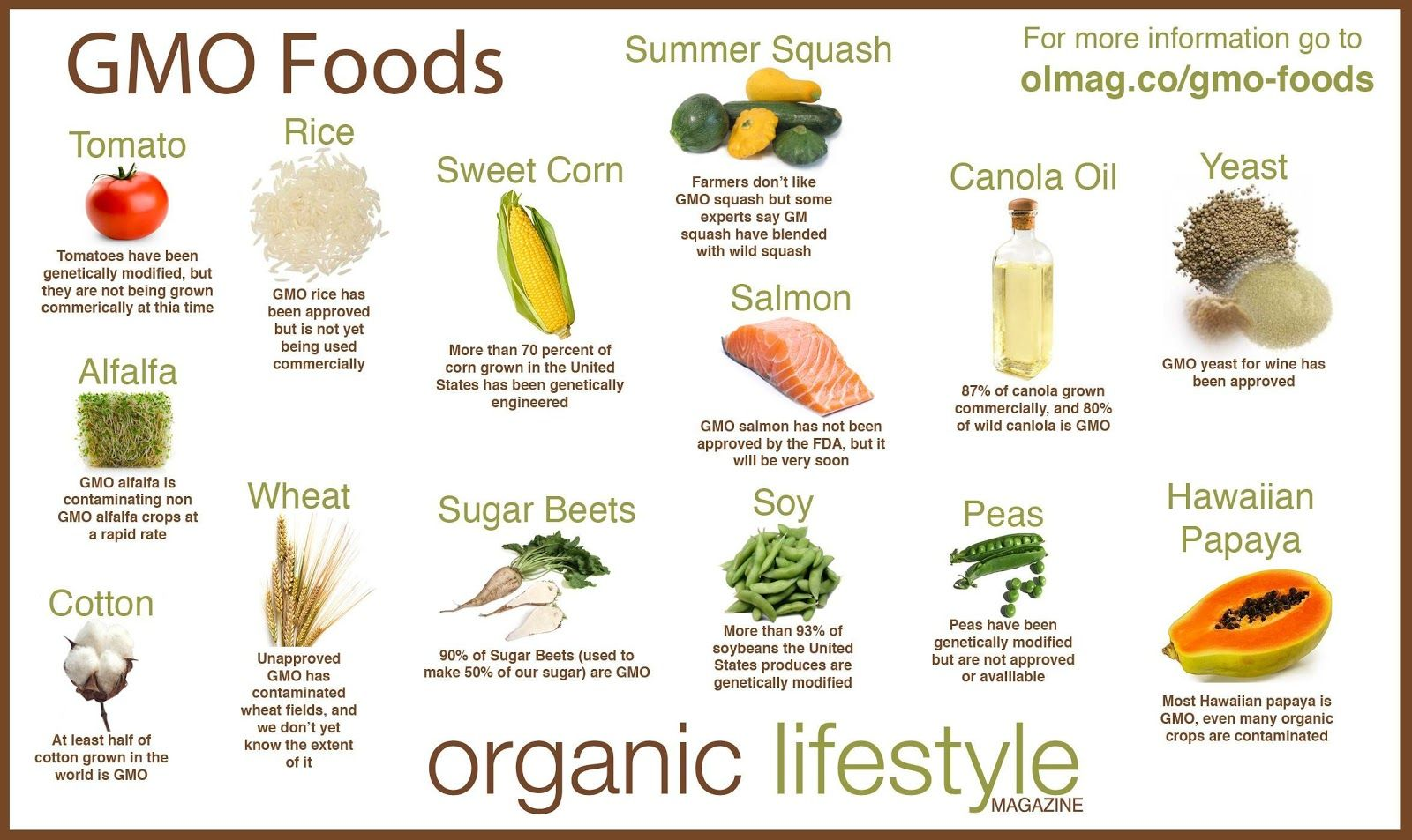 geneticky modifikované potraviny gmo