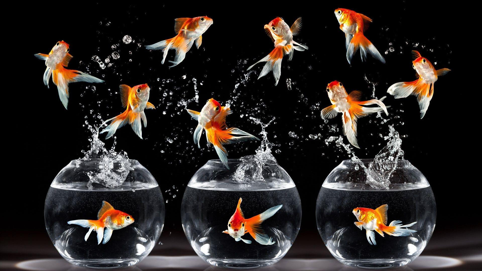 3 dôvody prečo užívať rybí olej