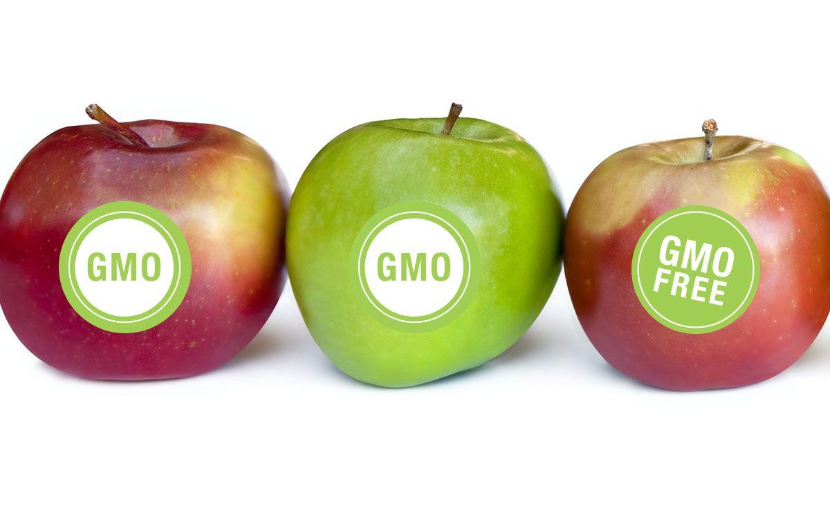 gmo geneticky modifikované potraviny