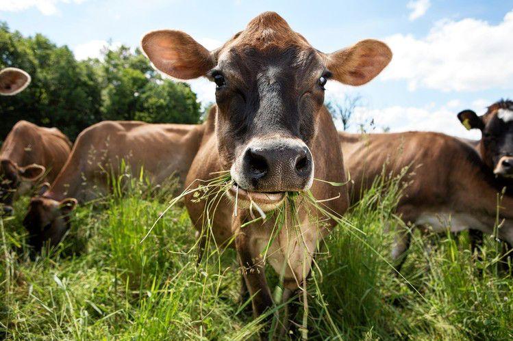 Organic Whey Protein diet food bio srvátkový proteín